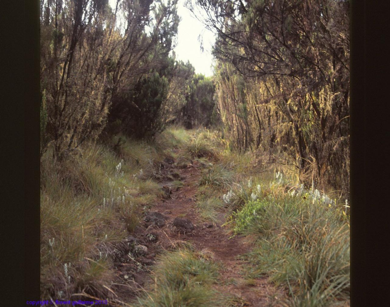 Sur le sentier du Kilimandjaro