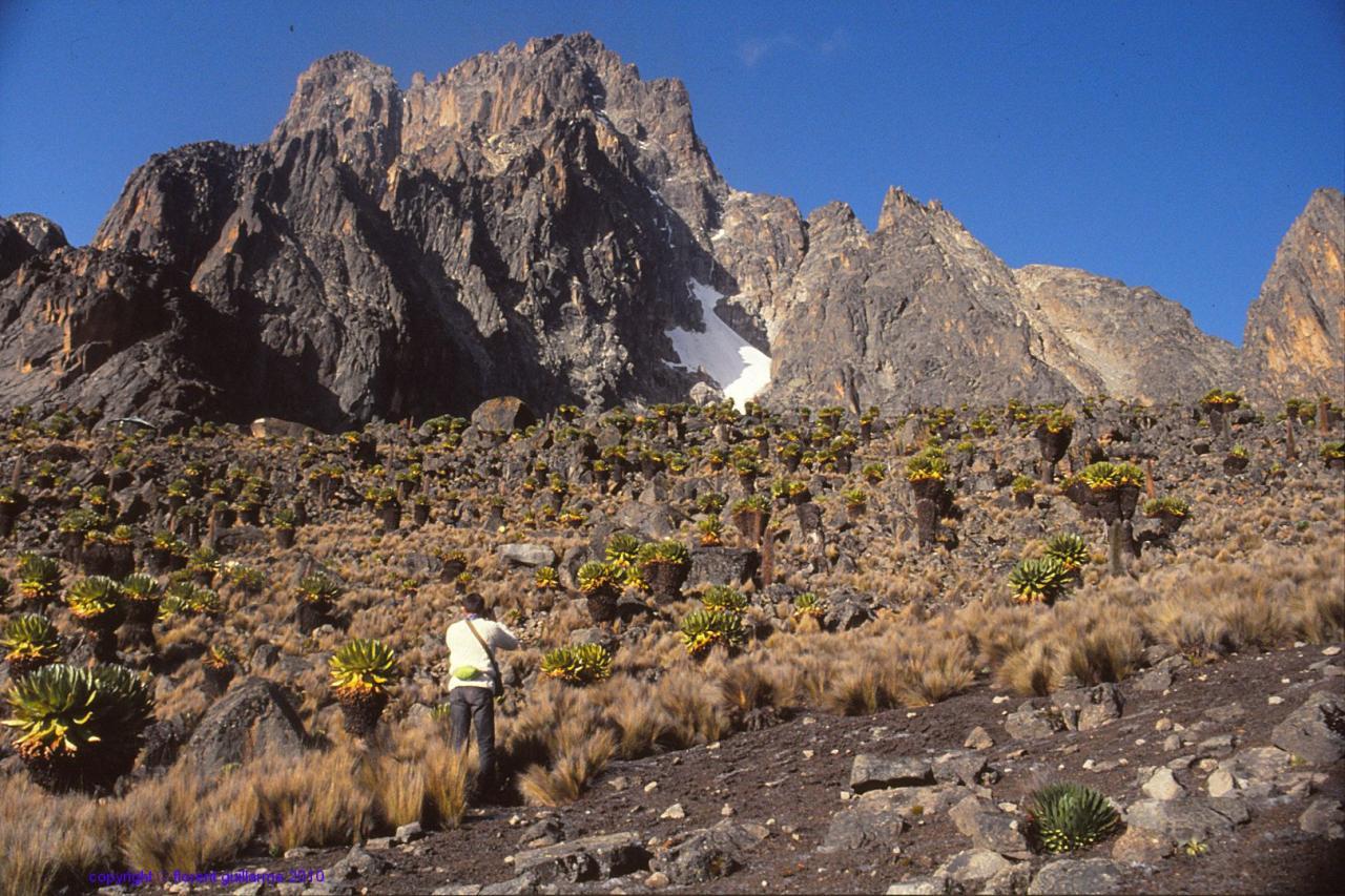 Devant les deux principaux sommets du massif du Mont Kenya