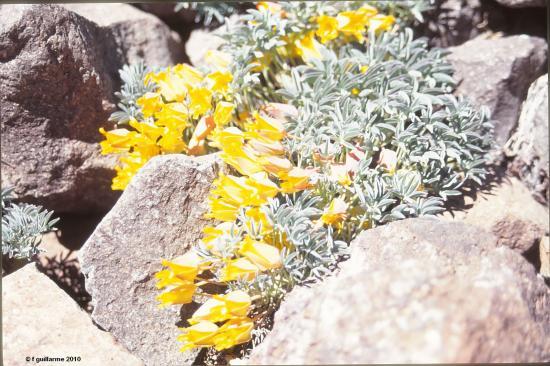 Végétation sur sentier du Cerro Plomo, Chili