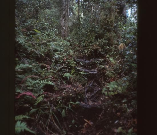 Jungle dense