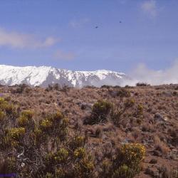 Le Kilimandjaro, 5895 mètres, Tanzanie