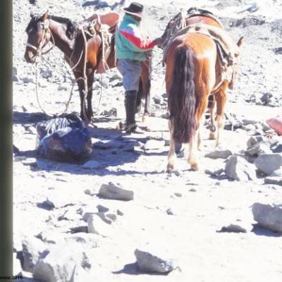 Arriero, au camp de base du Cerro Plomo, Chili