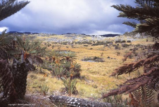 Haut plateau